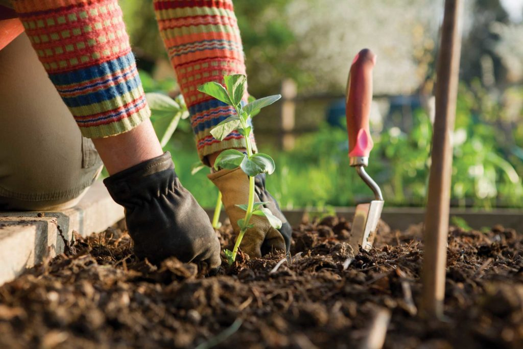 Gardening Tools for the Impaired