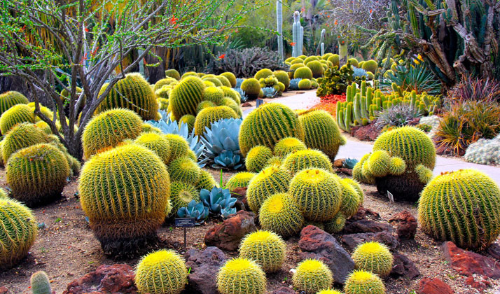 How to take care of cactus to improve our garden appeal