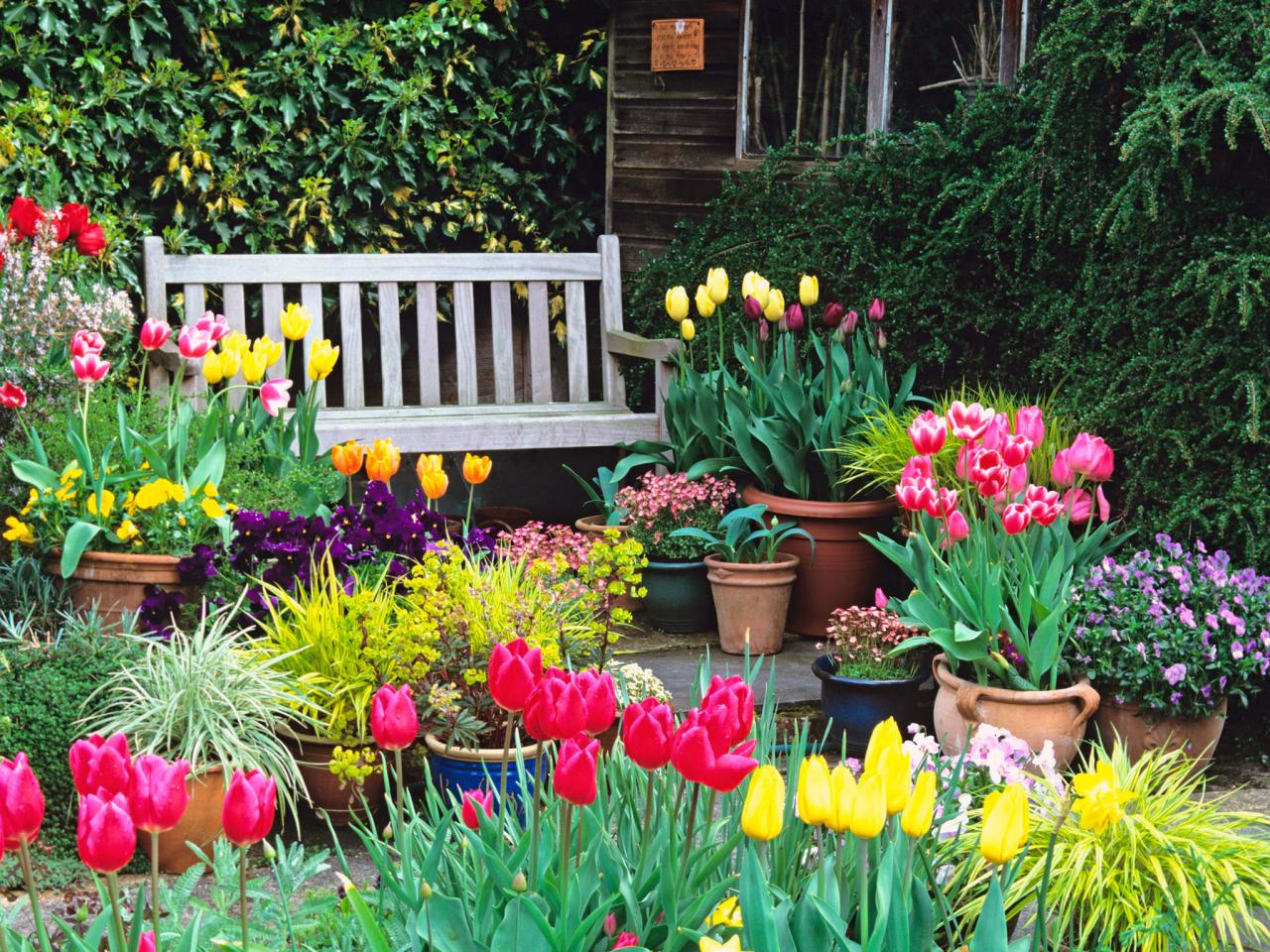 Flower Planting Tips for Your Nice Backyard Garden
