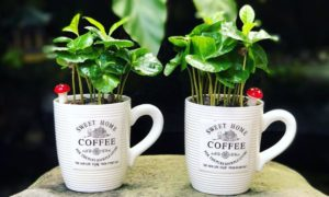Best Indoor Plants – Easy to Grow and Increase the Beauty of Room