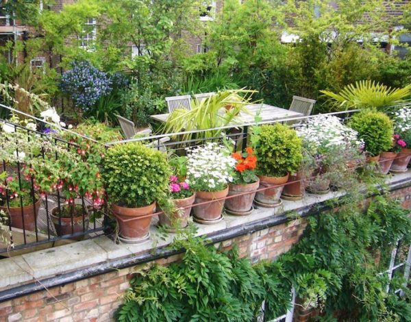 How to Have a Fun Garden with a Small Space
